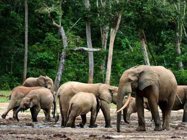 pg-32-elephants-alamy.jpg