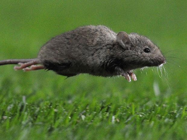 mouse-gt.jpg