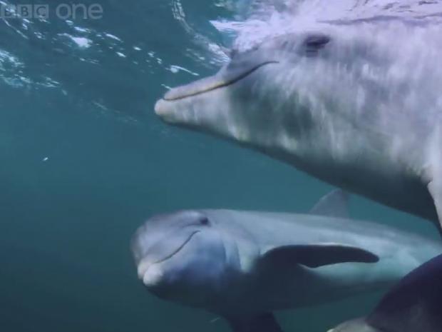 dolphins-bbc-youtube.jpg