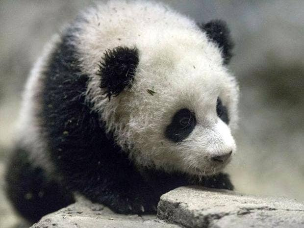 panda-1.jpg