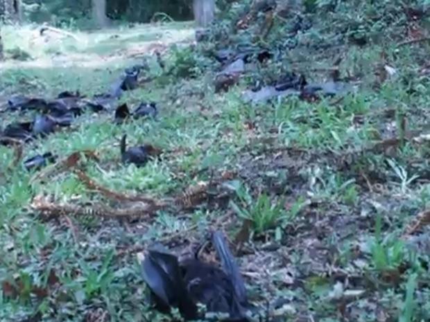 dead-bats.jpg