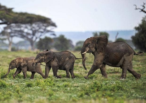 elephantsroaming.jpg