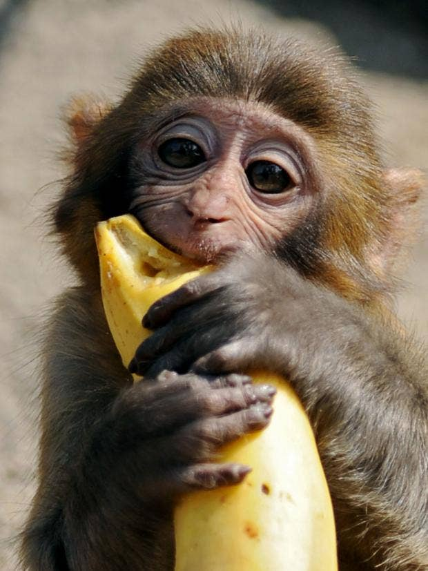 monkey-banana.jpg