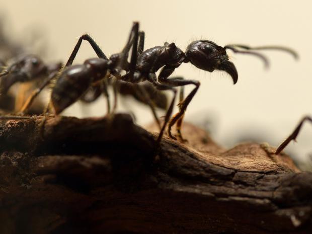 Ants-Getty.jpg