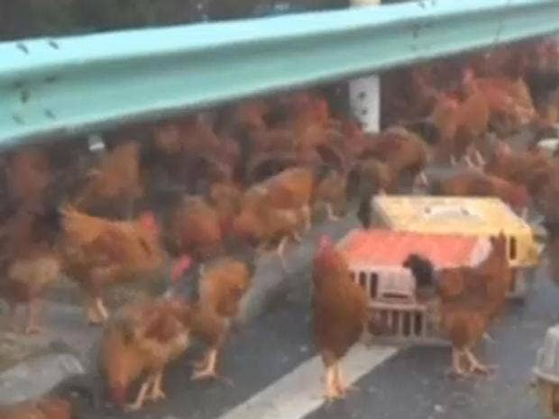 chicken-run.jpg
