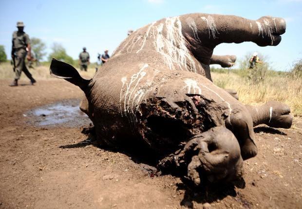 rhino-poaching.jpg