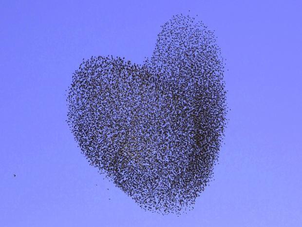 flock-1.jpg