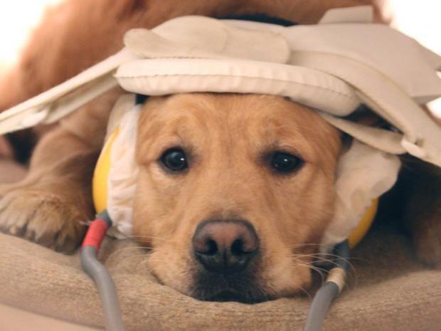 dog-scan.jpg