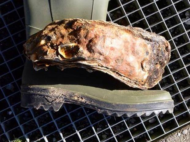 oyster-denmark.jpg