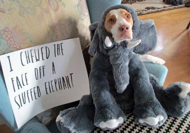 dogshaming.jpg