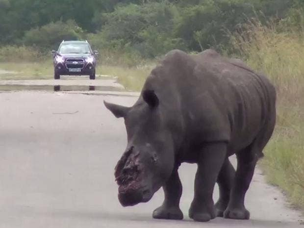 rhino-horn-poacher.jpg