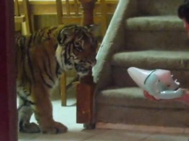 tiger-dustbuster.jpg