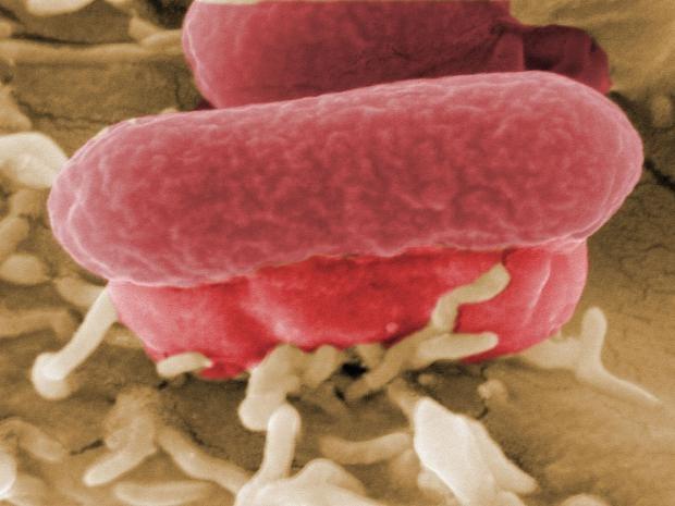 microbes-getty.jpg