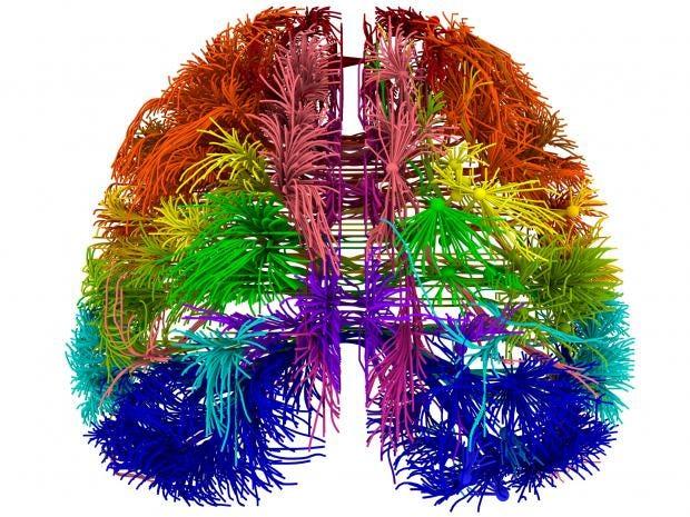 web-3d-brain.jpg