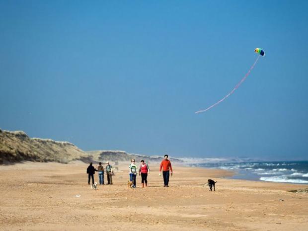 beach-Rex.jpg