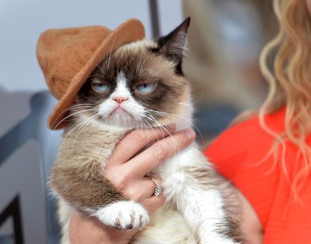 Grumpy-Cat-Getty.jpg