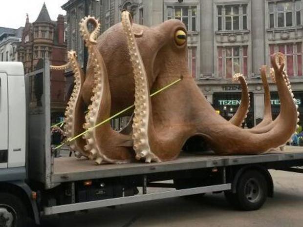 octopus-5.jpg