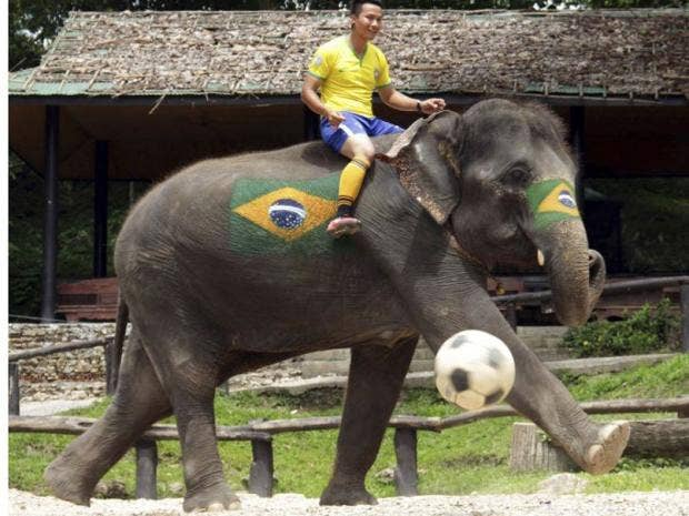 Elephant-World-Cup-1.jpg