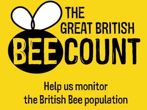 BeeCount.jpg