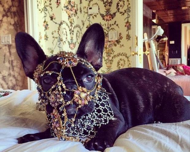 Gaga-Dog.JPG