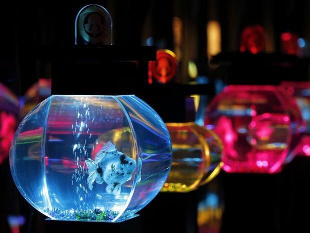 Art-Aquarium-3.jpg