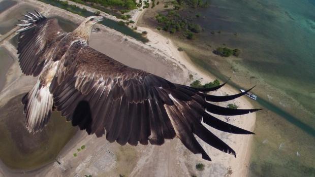 eagle-960x540.jpg