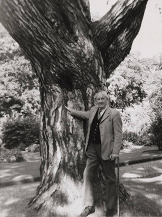 pg-26-tolkien-tree-1.jpg