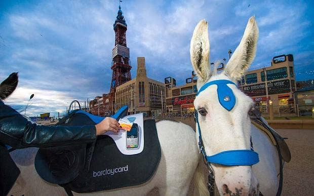 contactless donkeys.jpg