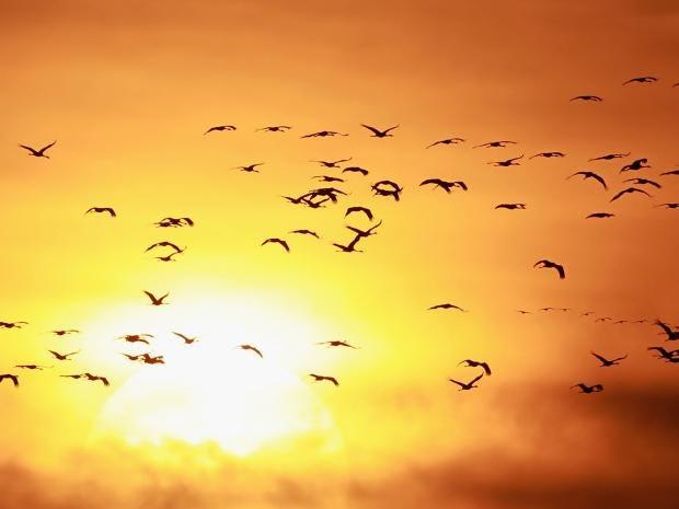 birds.gt.jpg