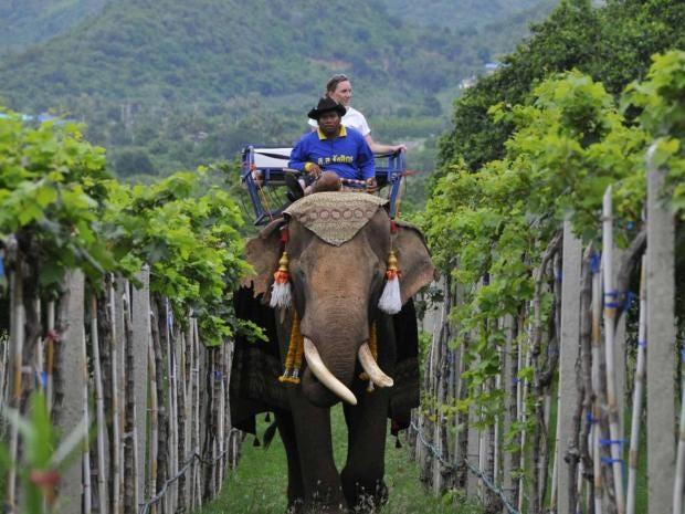 elephantepa.jpg