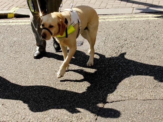 guide-dogs.jpg