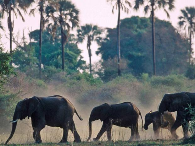elephants_alamy.jpg