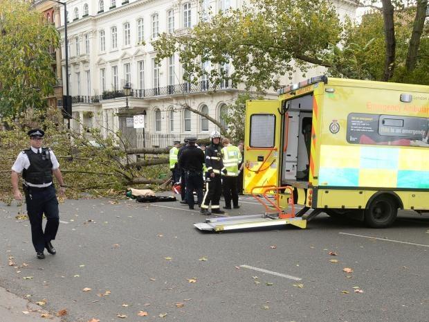 Kensington-tree-fell2.jpg