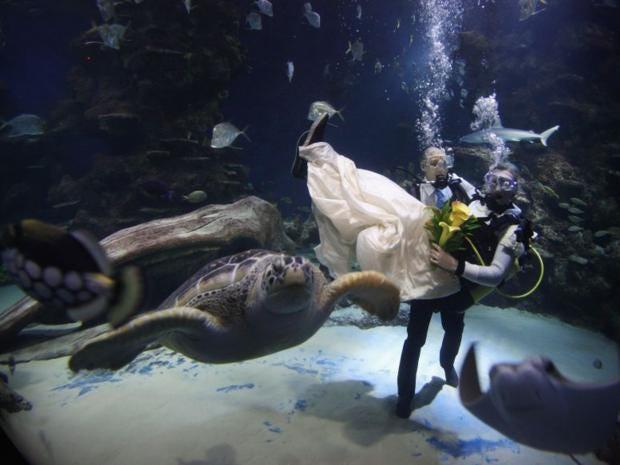 6-AquariumWedding-Getty.jpg