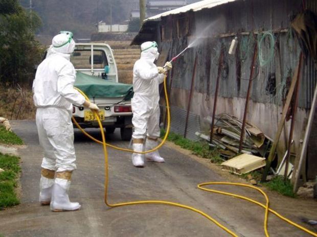 Japan-bird-flu.jpg