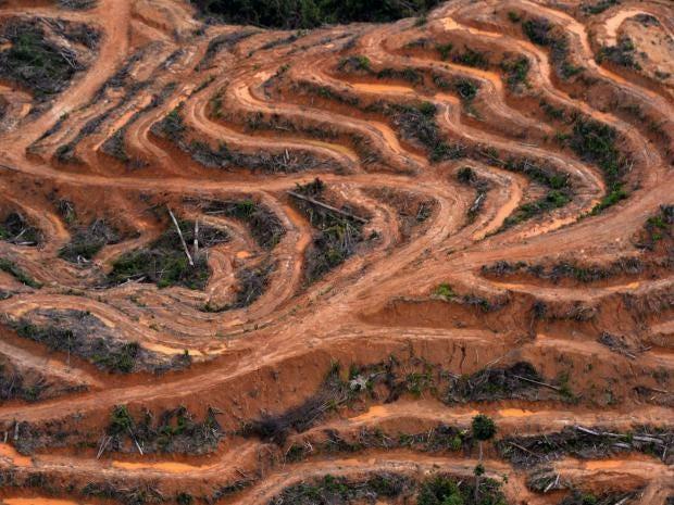 17-rainforest-getty.jpg