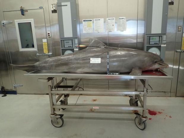 florida-dolphin-new.jpg