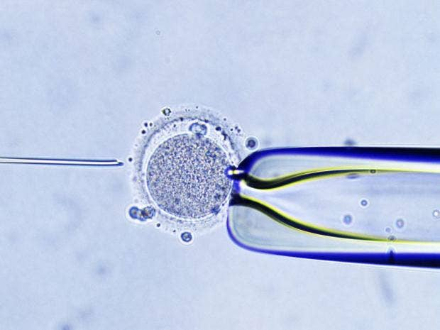 4-IVF-Injection-Rex.jpg