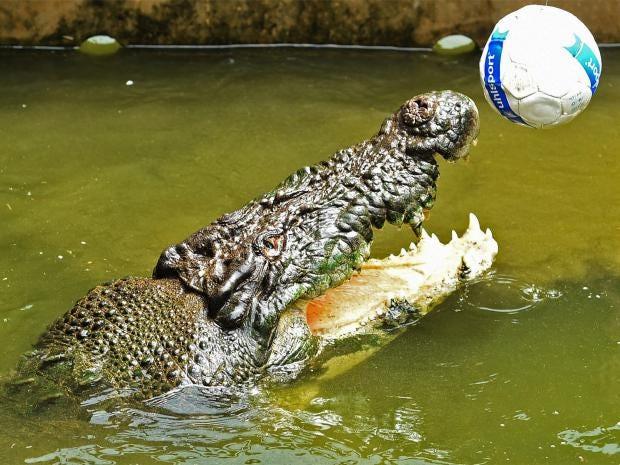 pg-22-crocs-rex.jpg