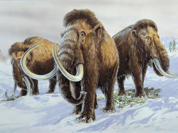 Wooly-Mammoths.jpg