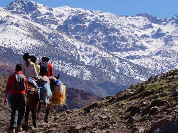 morocco_mule.jpg
