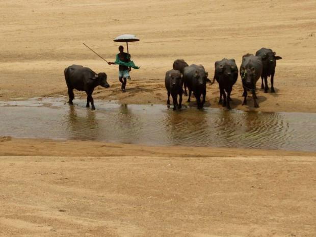 India-heatwave7.jpg