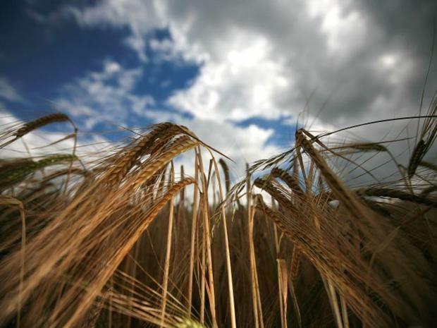 16-Wheat-Harvest-Getty.jpg