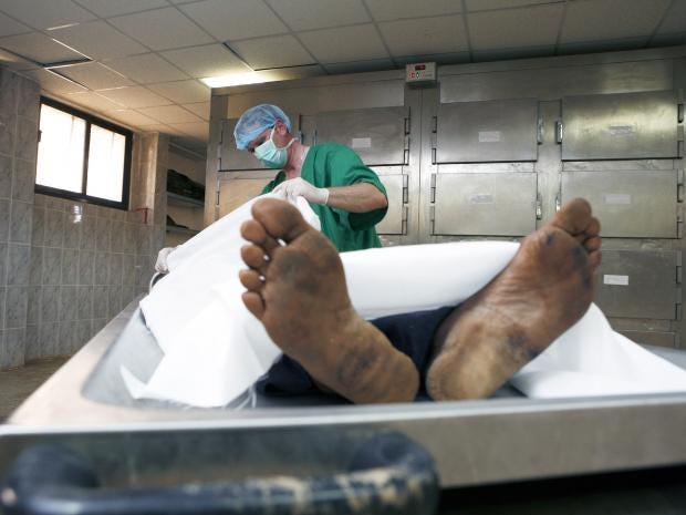 web-autopsy-rex.jpg