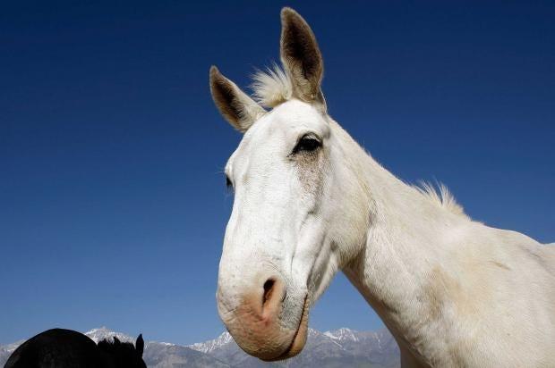 Horse_Getty.jpg