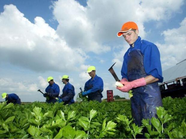 4-migrant-workers-rex.jpg