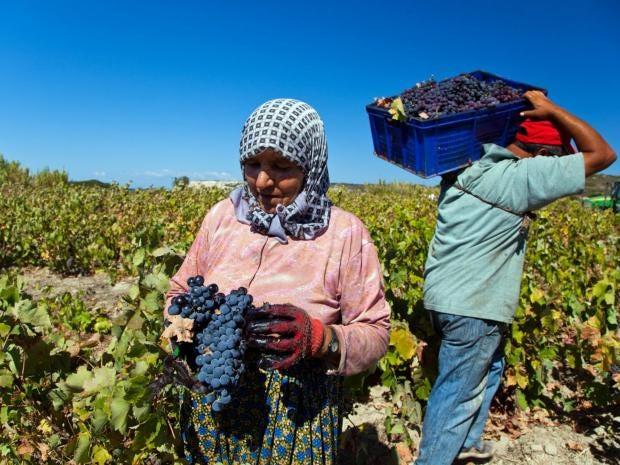 29-turkey-vineyard-afp.jpg