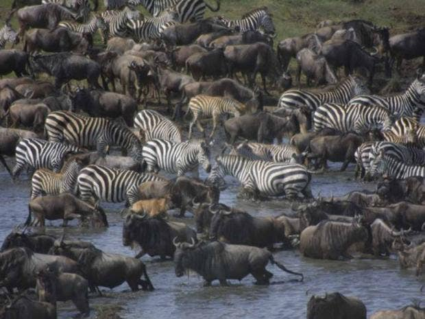 last-serengeti-ap.jpg