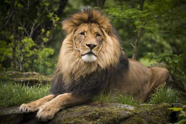 lionberlin.jpg