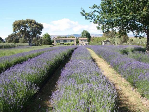 lavender-hawdon.jpg